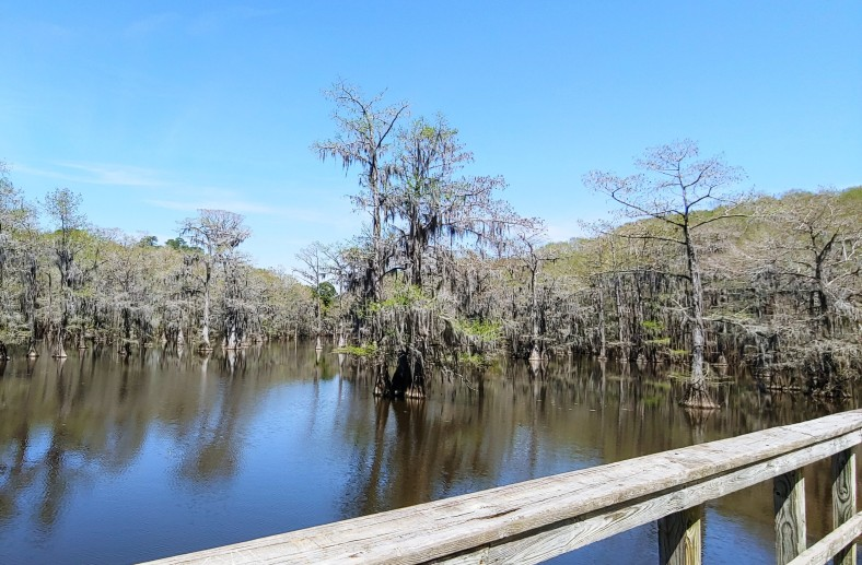 tent lake Caddo Cypress